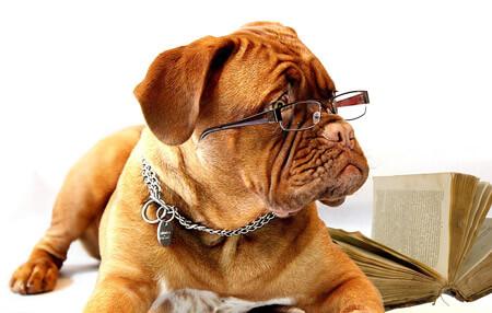 Dog quiz questions