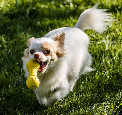Keep dog outdoors to reduce dog allergens in the house